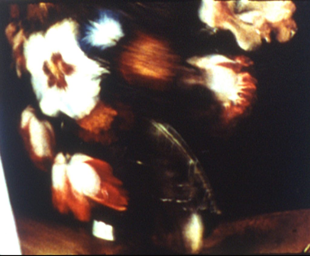 The Parabole Of The Tulip Painter And The Fly (Charlotte Pryce, 2008)