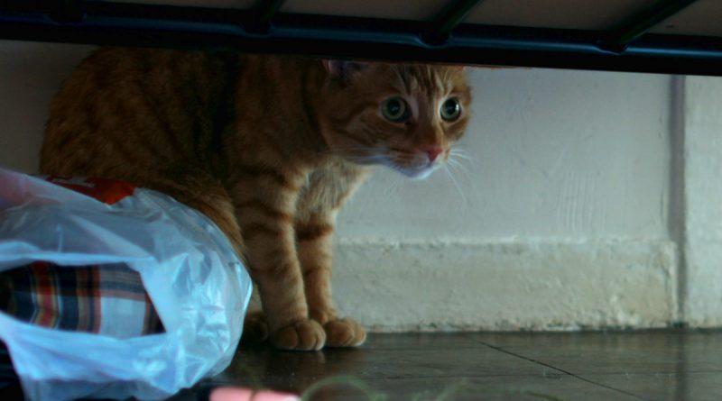Cat in the wall-Revista mutaciones