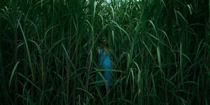 tallgrass-mutaciones