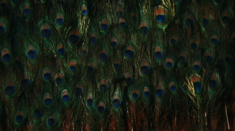 The Metamorphosis of Birds