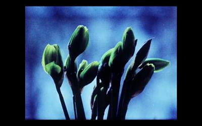 Plantas trepadoras - Revista Mutaciones