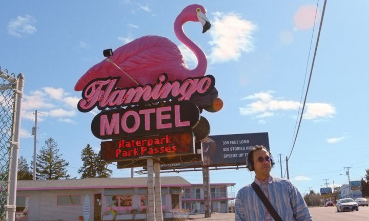 The mistery of the pink flamingo